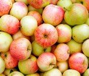 заготовки из огурцов с яблоками