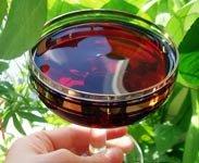 Домашнее вино из черноплодной рябины и яблок